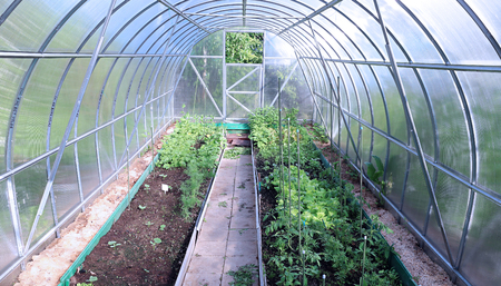 polycarbonate: Growing vegetables in greenhouses made of transparent polycarbonate