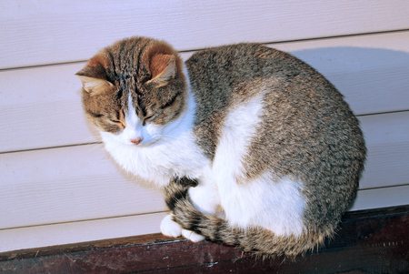 luxuriate: Cat basking in the sun, sitting on the fence Stock Photo