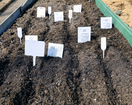 sowing: Sowing seeds in the soil in the garden in early spring Stock Photo