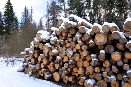 timber harvesting: Harvesting timber logs in a forest in Russia in winter