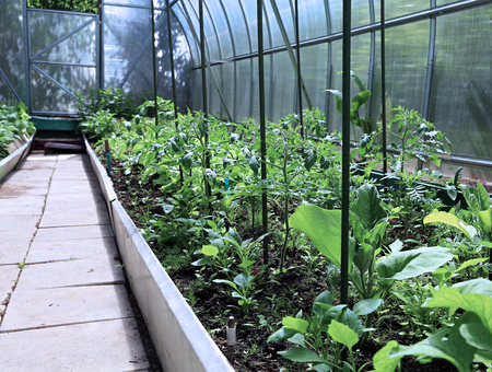 struts: Growing vegetables in greenhouses made of transparent polycarbonate