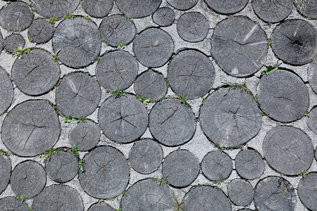 sawed: Background of pathway of sawed logs and concrete in Dudutki Stock Photo