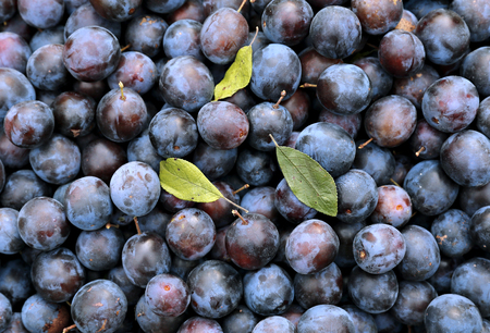 plurality: Background of the plurality of blue thorns plums fruits