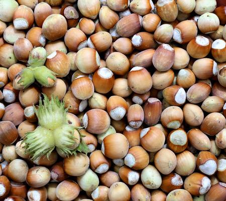 plurality: Background of the plurality of hazelnut closeup Stock Photo