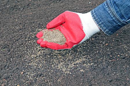 siembra: Sembrando semillas de c�sped en el suelo en el c�sped