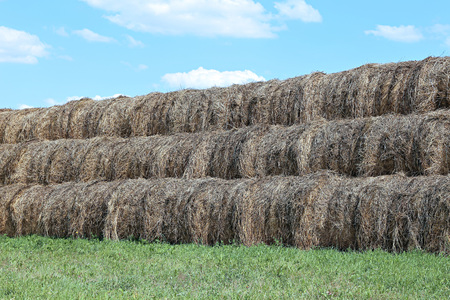 haystacks: Haystacks on the farm in field on a sunny day