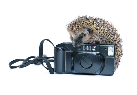 Forest wild hedgehog with a camera isolated on white background