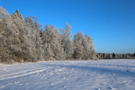 snowcovered: Landscape of snow-covered field and trees are spruce and birch in Russia