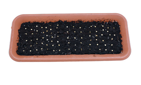 flower box: Sowing seeds in the soil in the flower box at early spring isolated on white background