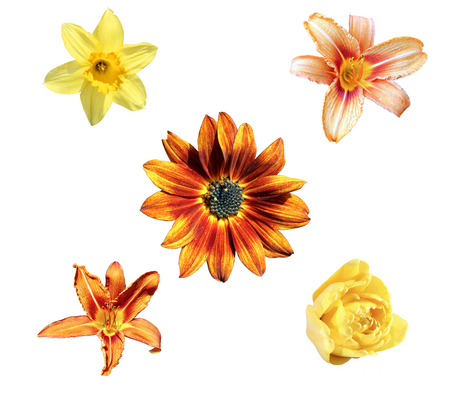 Set of flowers yellow narcissus, tulip, decorative sunflower and orange daylily isolated on a white background