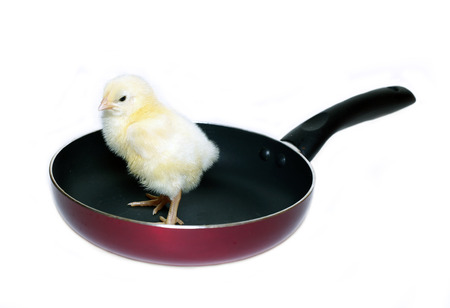 Nestlings little yellow chick on frying pan with non-stick coating isolated on white background Stock Photo