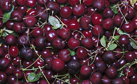Background of many red ripe cherry berries