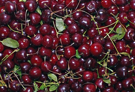 Background of red ripe cherry berries