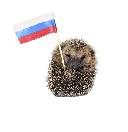 Forest wild hedgehog with the Russian flag isolated on white background