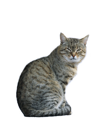 Dissatisfied with the cat sitting isolated on white background