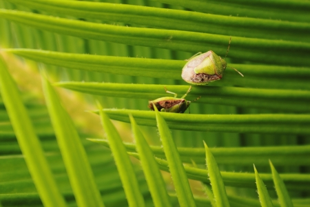 Two bugs on the leaf