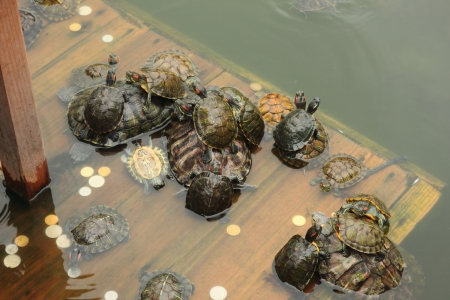This is a picture of tortoise have took in south putuo temple of XiaMen,china Stock Photo