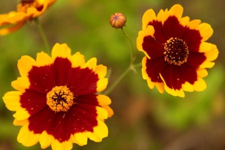 Wlid flower