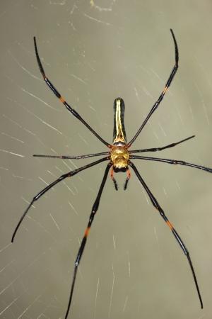 Spider Stock Photo - 17266149