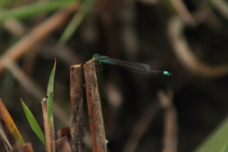 Dragonfly Stock Photo - 18165967