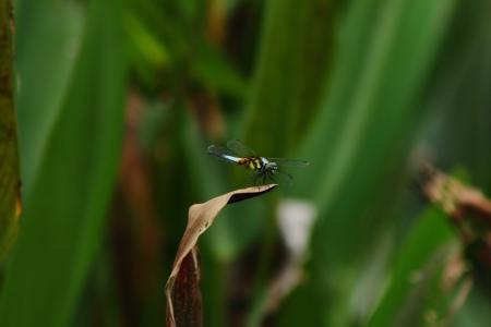 vague: Dragonfly