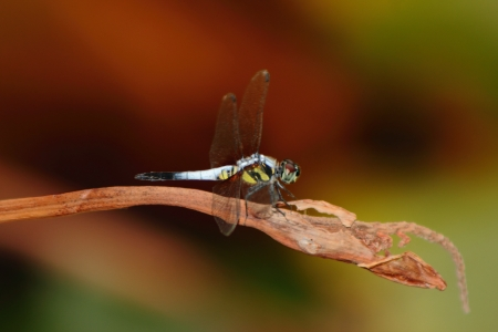 Dragonfly Stock Photo - 18165970