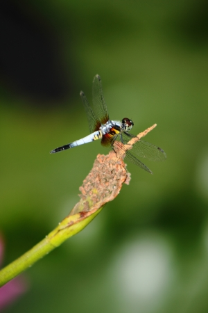 Dragonfly Stock Photo - 18165972