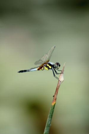 Dragonfly Stock Photo - 18165968