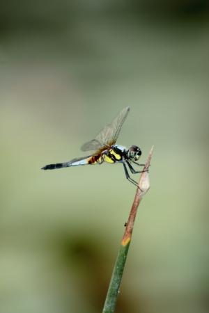 Dragonfly Stock Photo - 18165968
