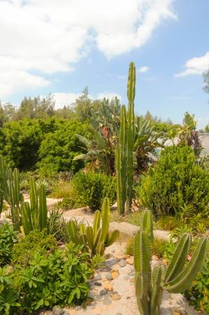 cactus Stock Photo - 18165979