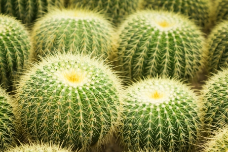 Round cactus photo