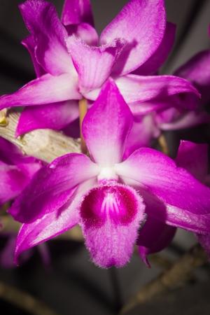 flowering plant: Questa foto � stata scattata a Xiamen giardino botanico, la Cina Orchid � la pianta da fiore pi� numerosa e diversificata del pianeta ciascuno dei diversi fiori di essi � strettamente accoppiati con gli animali che impollinate