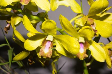flowering plant: Questa foto � stata scattata nel giardino botanico di Xiamen, Cina Orchid � la pianta da fiore pi� numerosa e diversificata del pianeta ciascuno dei diversi fiori di essi � strettamente collegato con gli animali che impollinate Archivio Fotografico