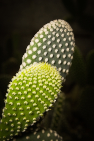 microdasys: This picture was taken in xiamen botanical garden ,China Cactus contains a lot of water in their leaves and stems, Then they use the spines to defence against the animals in the barren deserts