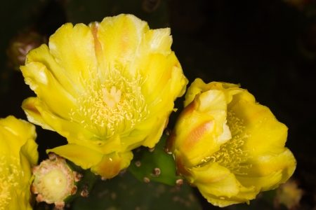 vivifying: This is a flower of cacti It was taken in xiamen botanical garden ,China Cactus often use their beautiful flowers to attract insects to do pollination for them in the barren deserts  Stock Photo
