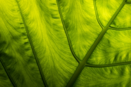 This picture was taken in xiamen botanical garden ,China  photo