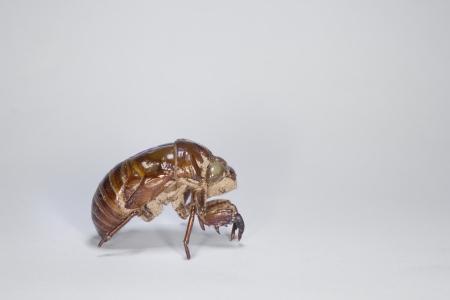 biont: Cicada Slough