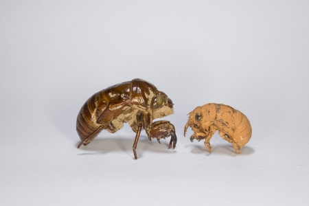 Different Kinds of Cicada Slough Stock Photo