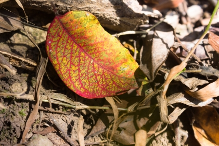 perish: This is a picture of fallen leaves was taken in XiaMen TianZhu Mountains,China