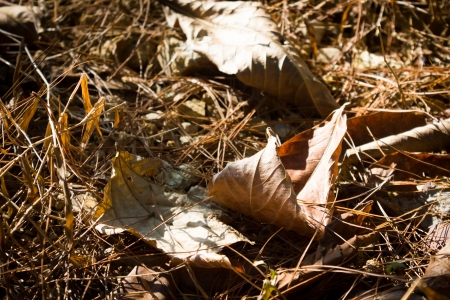perish: This is a picture of withered leaves was taken in XiaMen TianZhu Mountains,China  Stock Photo