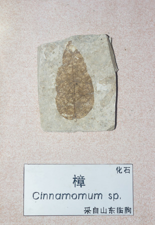fossil record: Phytolite