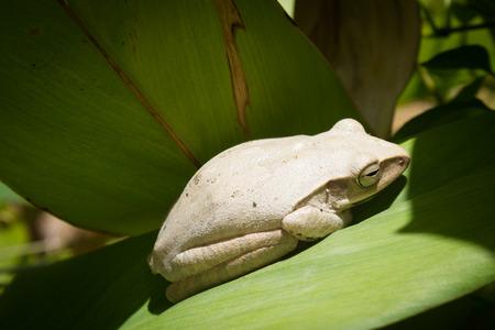 solarize: White Frog