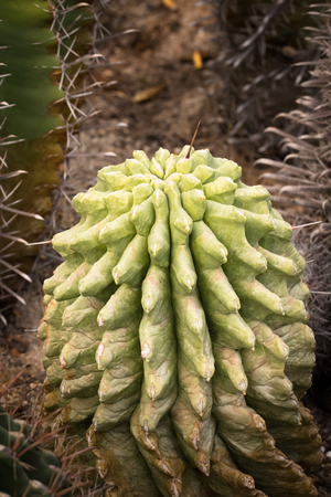 This is a photo of some kinds of cacti, was taken in Xiamen botanical garden ,China.