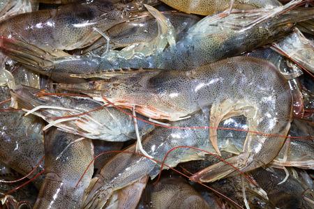 biont: prawns Stock Photo