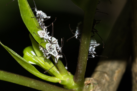 biont: This is a photo of some aphis, was taken in XiaMen botanical garden, China.