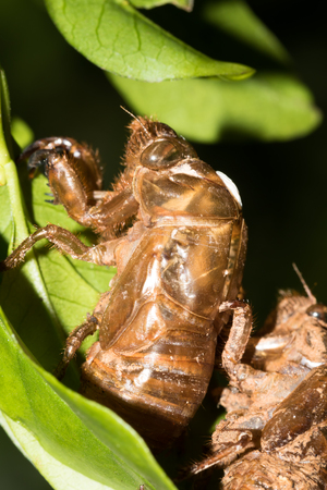 biont: This is a photo of some cicada slough, was taken in XiaMen exhibition garden, China. Stock Photo