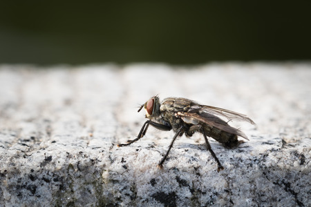 biont: Close up to a fly Stock Photo