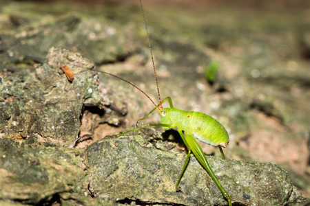 grig: Close up to cricket