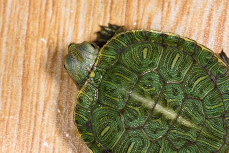 biont: tortoise. Stock Photo