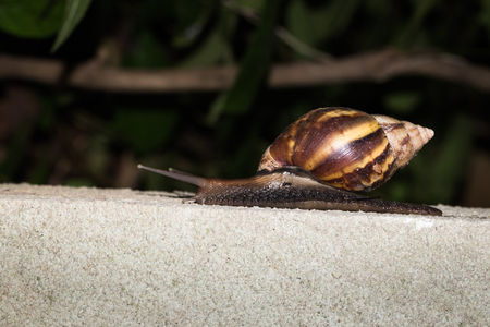 biont: This is a photo of a snail